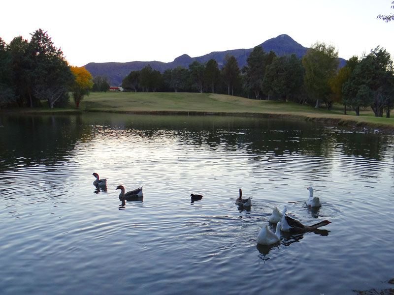 duck pond at New Mexico Tech