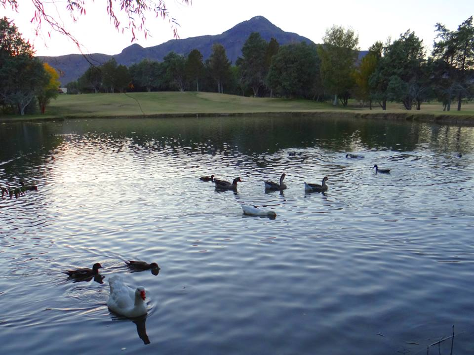 NM Tech Duck Pond