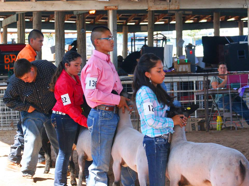 Socorro County Fair Animals 2013