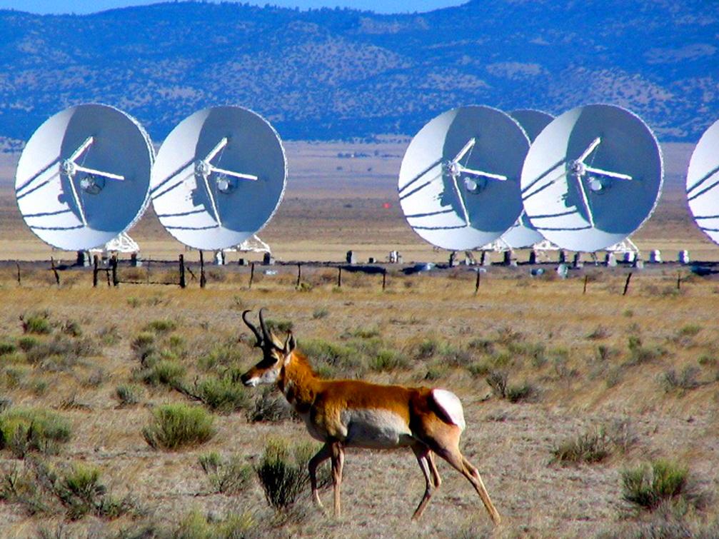 VLA-Antelope (Jennifer Polle)