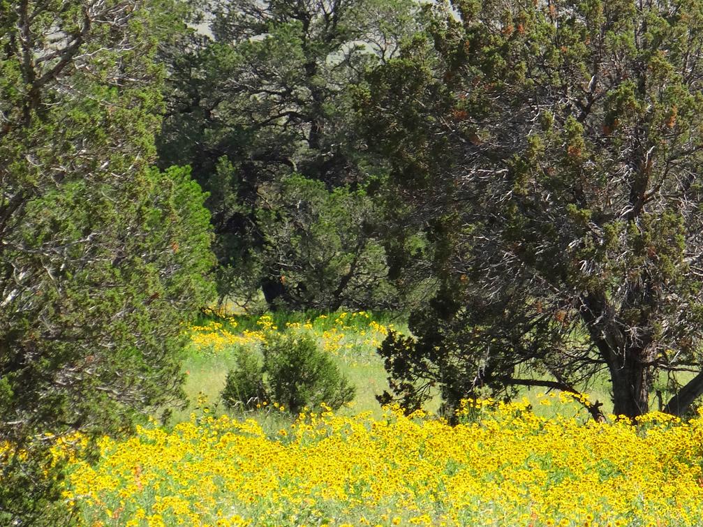 Magdalena Mountain Flora