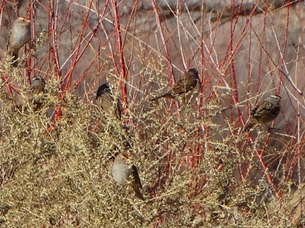 Socorro Nature Area Birds
